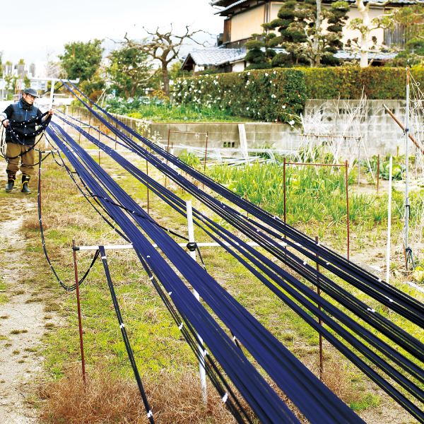 久留米絣 乾燥作業